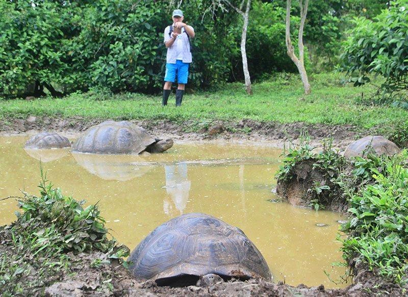 tortugas20