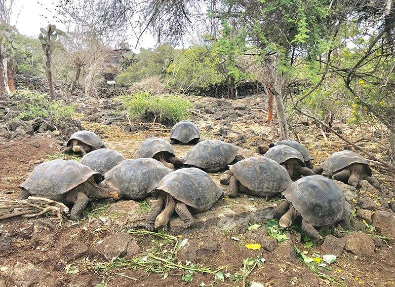 tortugas_rocas